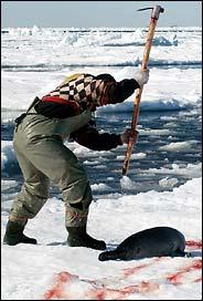 Tome, desgraçado! Quem mandou nascer foca em um mundo de idiotas?